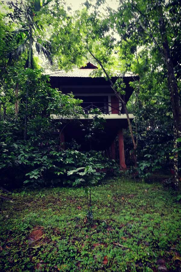 Our cottage in Coffee Acres Plantation, Wayanad
